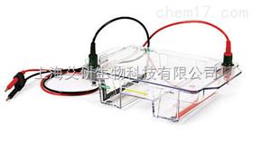 美国伯乐宽式Mini-Sub Cell GT水平电泳槽货号1704405