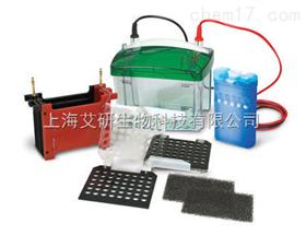 Mini Trans-Blot® Cell小型转印槽