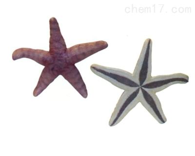 仿真海星 生物模型
