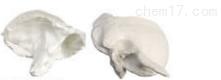 颞骨  教学模型