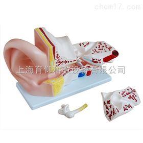 耳解剖放大模型(5倍)|脉管感觉系统模型