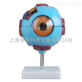 眼球放大模型|脉管感觉系统模型