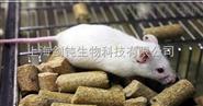 上海動物飼養實驗外包