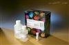 大鼠胆囊收缩素ELISA检测试剂盒