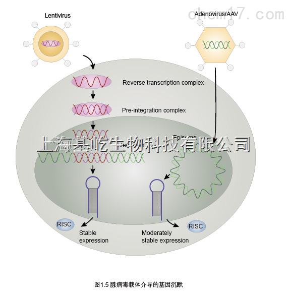 上海RNA抽提