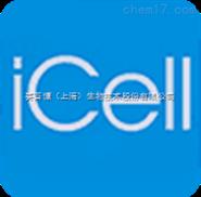 内皮祖细胞/免疫荧光鉴定