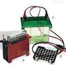 bio-rad 1703930小型转印槽 Trans-Blot Electrophoretic
