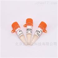 P1120核酸提取试剂 蛋白酶K溶液(10mg/ml)