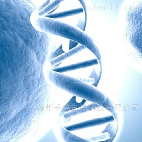 A431人表皮癌细胞(价格)