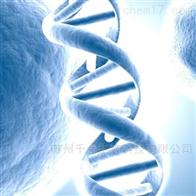 SKOV3SKOV3细胞人卵巢癌细胞(含STR鉴定)