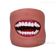 KAC/11C口腔清洁模型(带脸颊)