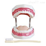 BIX/HY牙齿护理保健模型(放大5倍)