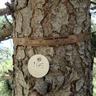 Dendrometer D1樹體莖幹生長記錄儀