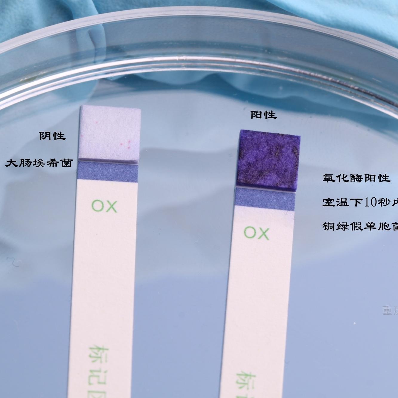 氧化酶试验试剂(OX)
