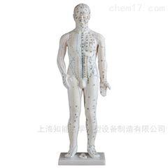 168cm标准人体针灸模型