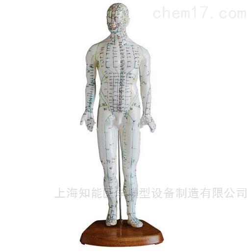 医博人体针灸模型(50cm)