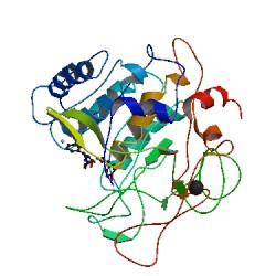 人血栓前体蛋白(TpP)elisa试剂盒