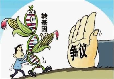 中国 安全 转基因食品/(图片源于中国青年网)...
