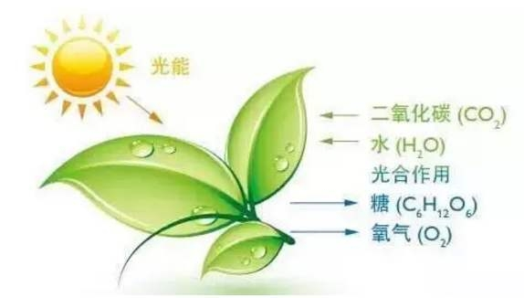 <strong><strong>光合测定仪器</strong></strong>