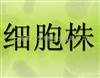 人单核细胞白血病,THP-1细胞