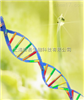 血浆胎儿DNA提取试剂盒