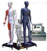 多媒体人体针灸模型