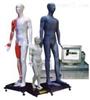 JAW-100E中医针灸教学模型|光电感应键控人体针灸穴位发光模型