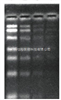 PCR抑制物清除剂
