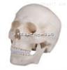 SMD006头颅骨模型(三部件)  教学模型