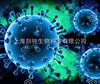 上海过表达慢病毒构建及包装实验外包