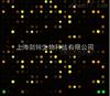 上海microRNA芯片实验