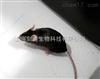 郑州自发活动实验外包